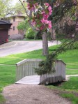 Budding tree by bridge